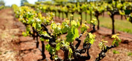 Wine tasting in Napa and Sonoma on Trek Travel's California Wine Country vacation