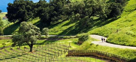 Ride past vineyards on a California Wine Country bike tour