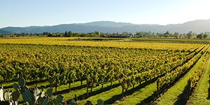 California Wine Weekend with Trek Travel Bike Tours