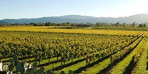 California Wine Weekend with Trek Travel Bike Tours