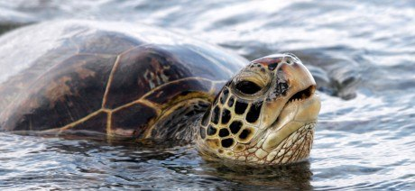 05HI_sea-turtle_1600x670