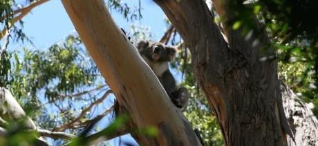 South-Australia_09_1600x670