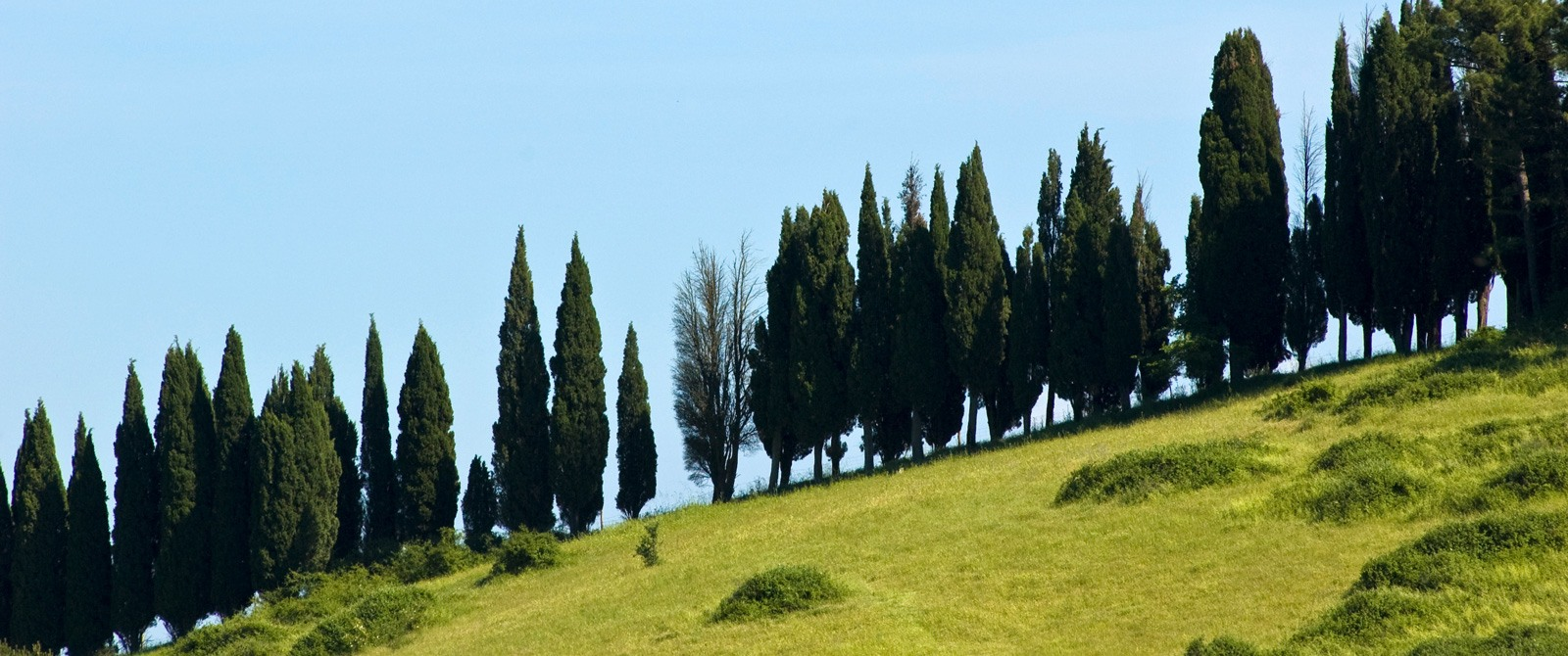 Strade Bianche Bike Tour Cycling In Tuscany