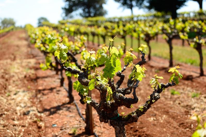 California Wine Country Long Weekend bike tour