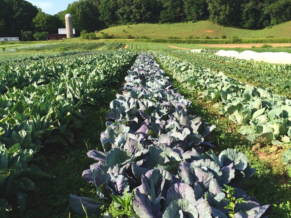 Trek Travel visits Gaining Ground Farm in North Carolina