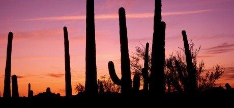 Saguaro_purple_sunset_silohuette[1]-1600x670
