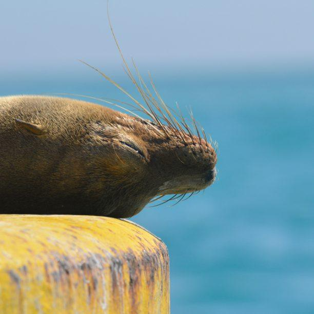 View full trip details for Ecuador and the Galápagos Islands