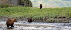 18AK-McNeil-River-Three-Bear-1600x670