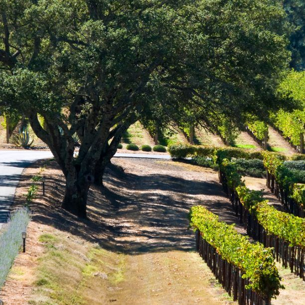View full trip details for California Wine Country Long Weekend