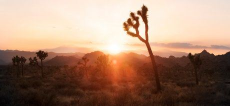 JoshuaTree_Sunset-1600x670
