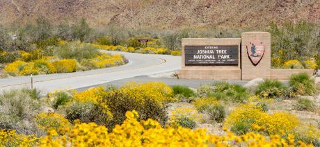 JoshuaTree_sign-1600x670