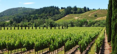 6ee2947b002 California Wine Country | Sonoma Bike Tours | Cycling Vacations