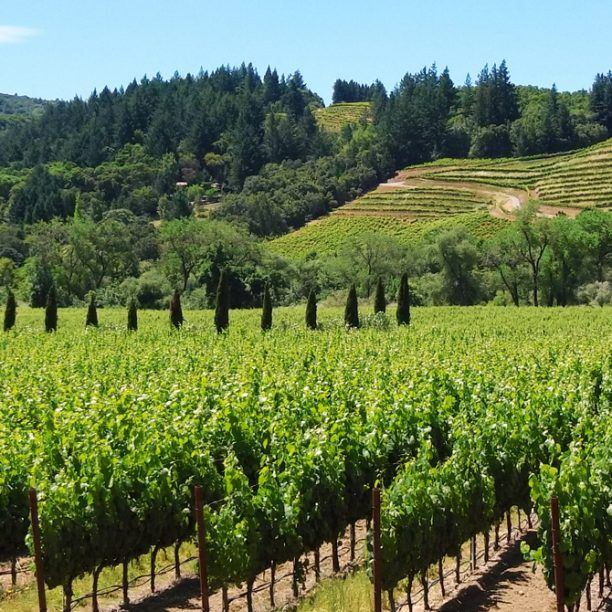View full trip details for California Wine Country Explorer