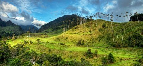 Colombia-wax-palms-in-cocora-1600x900