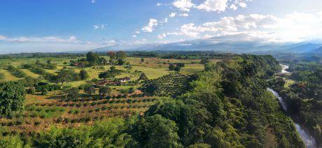 Colombia_Bambusa-06-1600x800