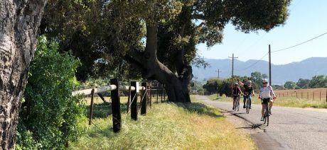 Ojai to Santa Barbara, California Bike Tours & Cycling Vacations
