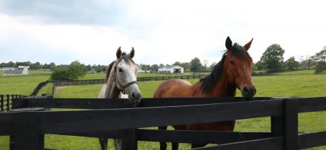 20BT_horses_1600x670