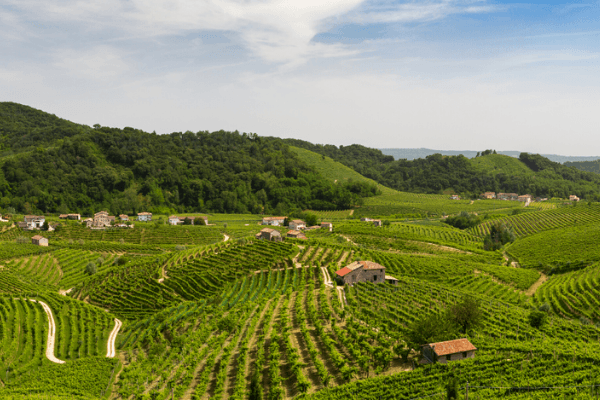 Ride along vineyards in Veneto