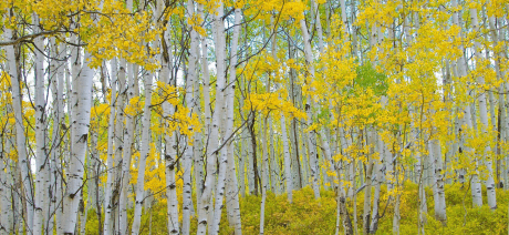 21AS - Aspens Canva - 1600x670