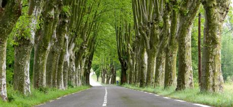 21PRV-ProvencePlaneTrees-CANVA-1600X670